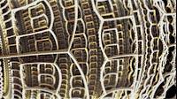 Arch Fractal Gold