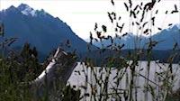 Argentina Bariloche Lake