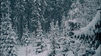 Beautiful Winter Nature Scene