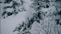 Beautiful Winter Snow Landscape