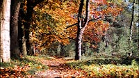Fall Forest Path Medium