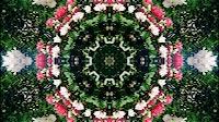Flower Kaleida 1