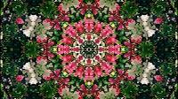 Flower Kaleida 3