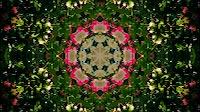 Flower Kaleida 6