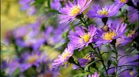 Nature Purple Flower