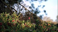 Nature Red Berries