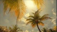 Palms Time-lapse