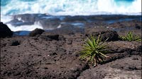 Rough Volcanic Shore With Colorful Vegetation