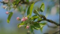 Spring Pink Blossom