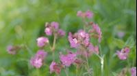 Spring Pink Flower 2