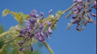 Spring Purple Flower 2