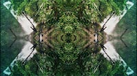 Trippy Jungle Trees And Waterfalls