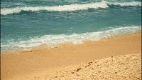 Tropical Island Beach 2