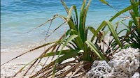 Tropical Seaside With Coral And Plant