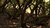 Woods Steadicam 1