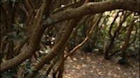 Woods Steadicam 2