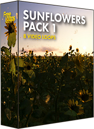 Sunflowers Pack 1